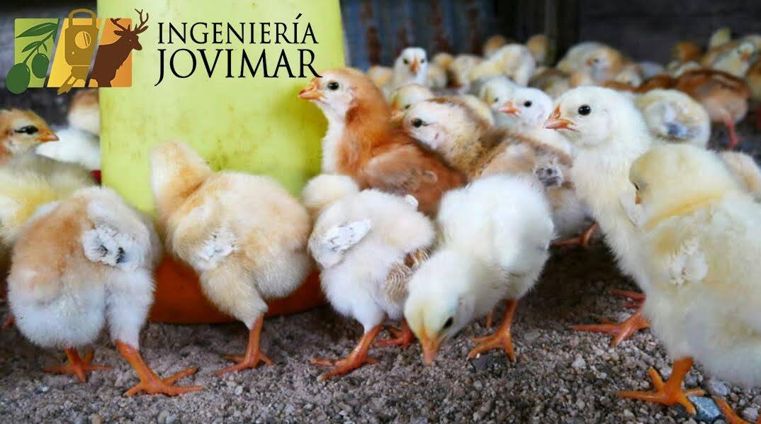 Apoyo a las Inversiones en Explotaciones Agrícolas