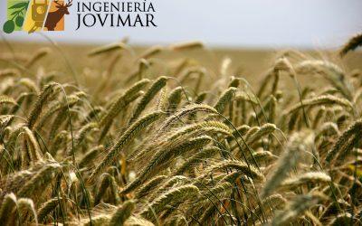 Seguros agrarios, la cobertura de riesgos para tus explotaciones agrícolas, ganaderas y forestales