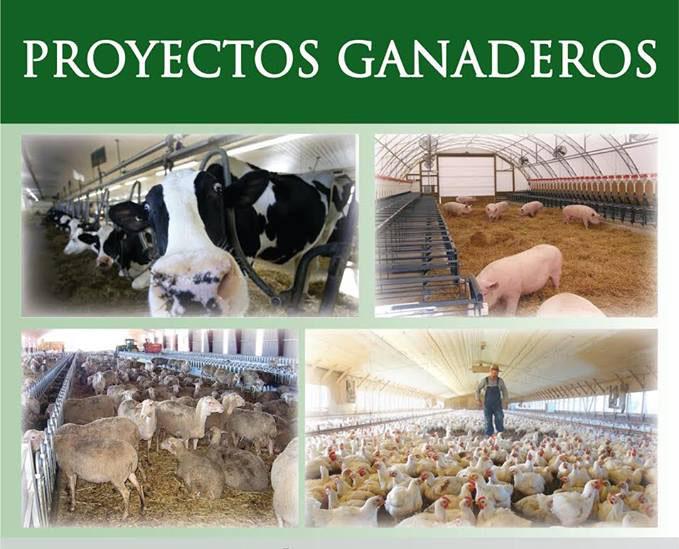Gestión económica y eficaz de proyectos ganaderos