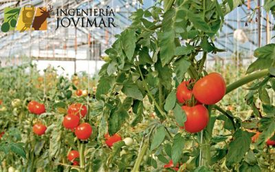 Ayudas para el sector agroalimentario