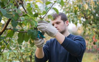 Ayudas para jóvenes agricultores en materia de creación de empresas