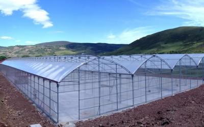 Ayudas para la renovación de invernaderos