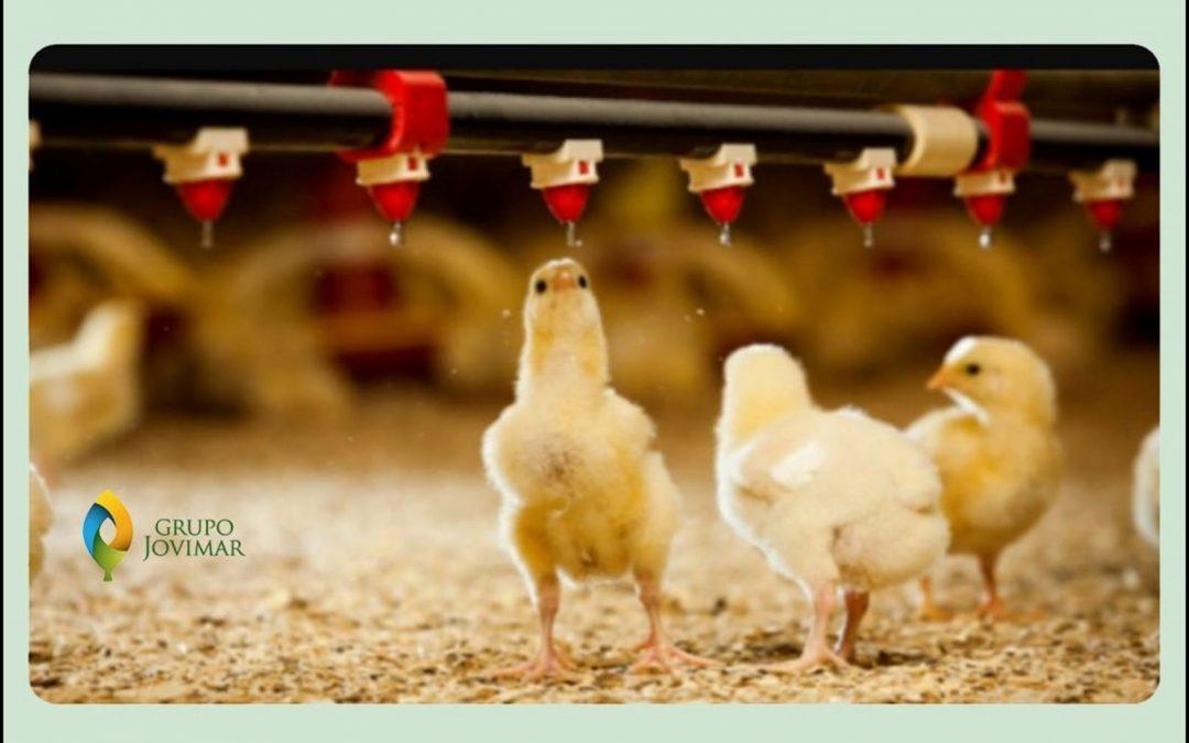 Curso online: Bienestar animal en explotaciones agrícolas